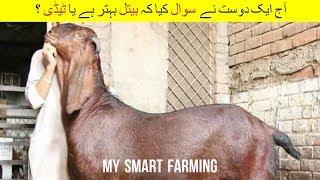 111 | Goat Farming | Poultry Farming | امداد باہمی سے دیسی