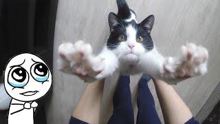 CAT LIKES HUGS