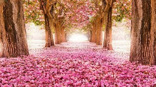 Top 40 Prettiest Flowers Wallpapers, Flower Delivery, Beautiful Flowers Destop Wallpapers 2018