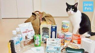 愛猫を守ろう!もしもの災害時に備える物や必要な心がけ。-JapanPets