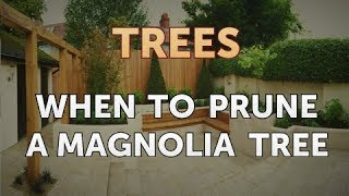 When to Prune a Magnolia Tree
