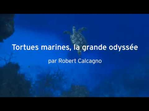 Tortues marines, la grande odyssée  - Robert Calcagno