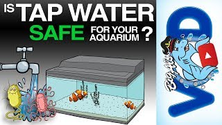 Is Tap Water Safe For Your Aquarium? | BigAlsPets.com