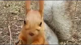 Бельчонок в лесах Зеренды умилил пользователей Казнета