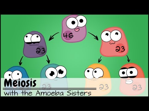 Meiosis - The Amoeba Sisters thumbnail