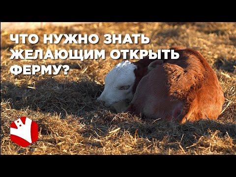 , title : 'Ферма с нуля | Что нужно знать желающим открыть ферму | Как стать фермером