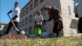 В Хвойнинском районе в селе Левоча восстанавливают яблоневый сад