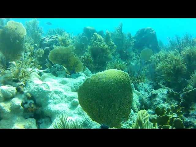 Islamorada Key Largo Reef Dive, Gopro HD Hero 2 with BlurFix (Full Dive Video)