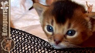 Котята из двух пометов [kotopurrs]