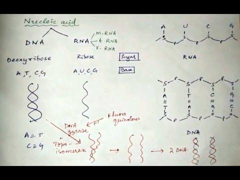 Tabletta komplex prosztatitis