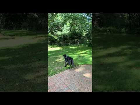Spero, an adopted Labrador Retriever Mix in Henrietta, NY