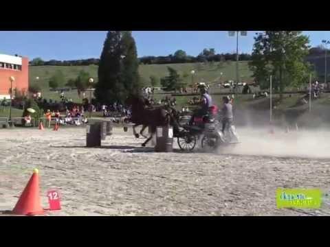 Campeonato Navarro de Enganches 2