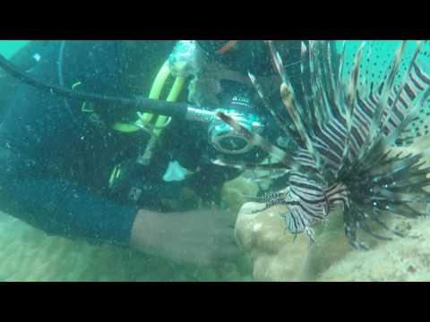 Lionfish at Swami Rock, Trincomalee, Sri Lanka - Taprobane Divers