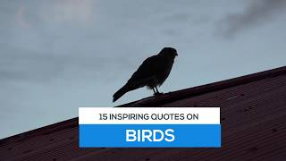 10 Beautiful Quotes Inspired By Birds | Wisdom Duck
