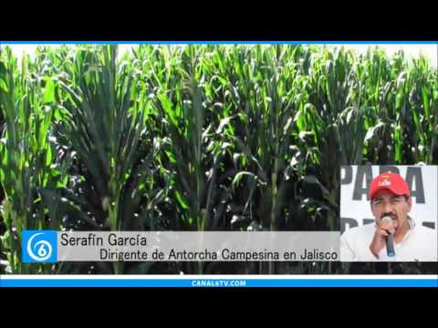 En entrevista telefónica con Serafín García, Dirigente de Antorcha Campesina en Jalisco