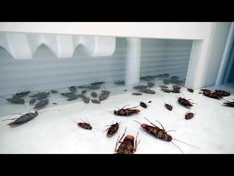Szem parazitákkal