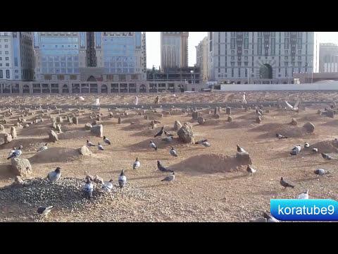 قبور الصحابة في المدينة المنورة ( البقيع )/ مقبرة البقيع من الداخل