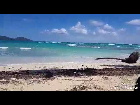 Enamorado de Playa Rincon