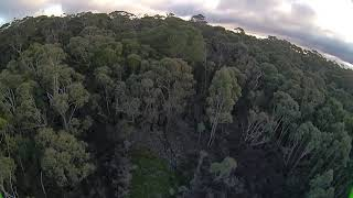 Flying around the swamp - Blue mountains FPV