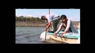preview picture of video 'Liberacion de crias de pescado en la presa el tecolote de Santa Ana Maya'