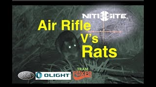 Air Rifle Ratting & NiteSite Sentinel Test