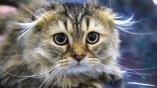 ЛЮТЫЕ ПРИКОЛЫ Смешные кошки Шутки с котами - Новенькие шутки (2019) МатроскинТВ