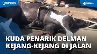 Diduga Kelelahan, Kuda Penarik Delman Terkapar dan Kejang-kejang di Jalanan Tangerang