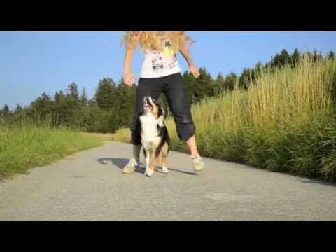 Amazing Dog Tricks – AMY (Australian Shepherd)