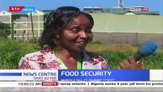 Food Security : Chia is an exotic plant in Nyeri, alleged to be good for immunity
