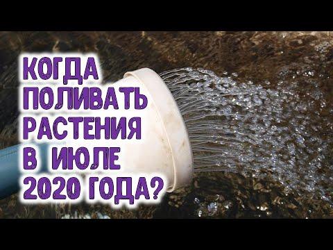 Когда поливать растения в июле 2020 года?