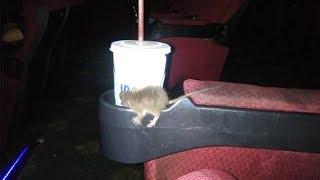Pria Melihat Seekor Tikus Muncul 3 Kali di Bioskop, Dengar Penonton Menjerit hingga Bau Lembab
