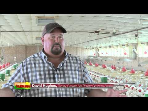 , title : 'Poultry Production from Start to Finish