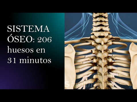 Sistema óseo y sus 206 huesos en 31 mins