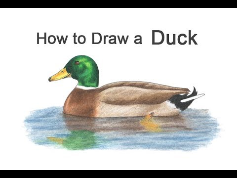 , title : 'How to Draw a Mallard Duck (Color)