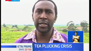 KTN Business: Tea plucking machines raise hackles