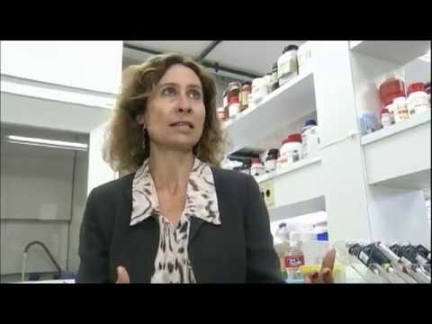 Novos fármacos para a diabetes tipo 2
