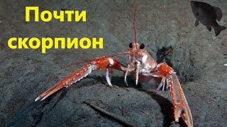 Скорпион в Кроссаут