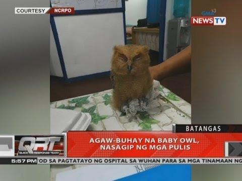 [GMA]  QRT: Agaw-buhay na baby owl, nasagip ng mga pulis