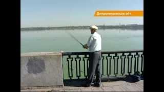 В Днепре появились опасные для человека рыбы-мутанты