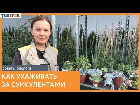Виды суккулентов и уход за ними / Советы биолога компании 7ЦВЕТОВ