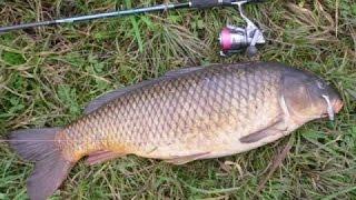 Рыбалка как ловить сазана снасти удилища леска