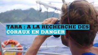 A bord du Tara : à la recherche des coraux en danger