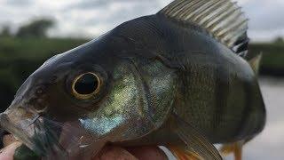 Малые реки подмосковья для рыбалки