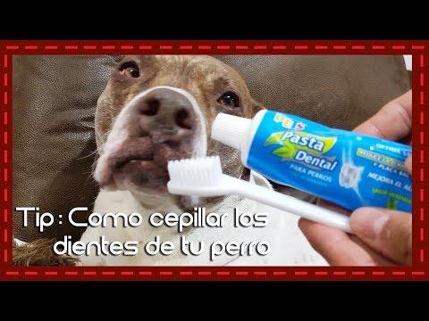 Tip: Como cepillar los dientes de tu perro