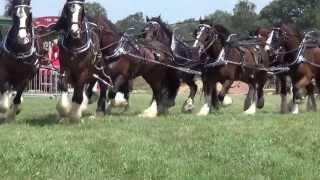 10 Horse Hitch at Tilligte Oldtimer Show 2013