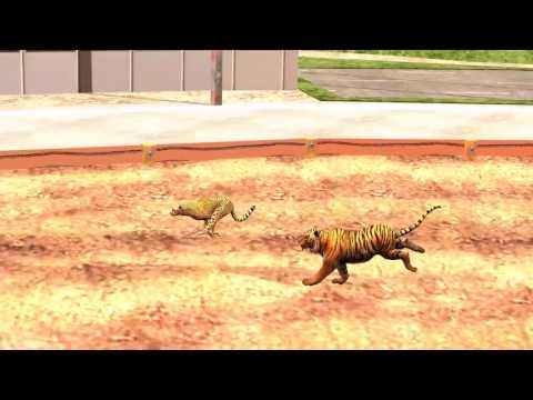 Animals Race   Cheetah Vs Tiger Running Race for Kids ¦ Who is the Fastest؟