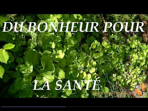 Voila quelques Plantes sauvages comestibles et médicinales