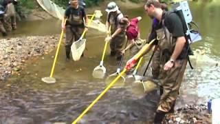 Electrofishing in the Stream