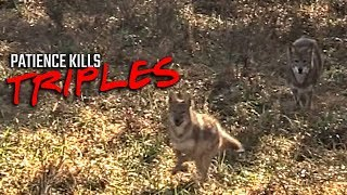 Patience Kills Triples - Coyote Hunting