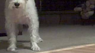 Dog Afraid Of Mr. Squiggles!!! - Video Youtube